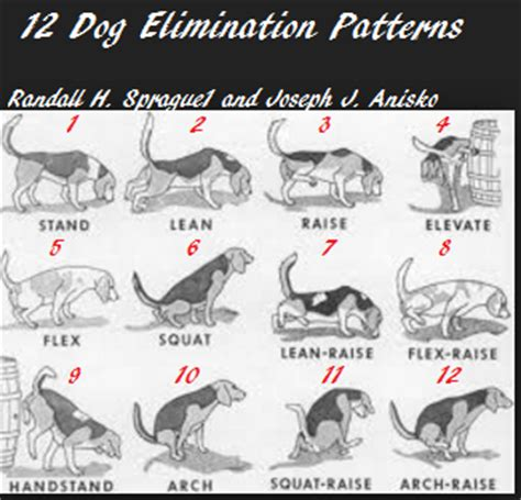 what to do when your dog pees in the house twelve dog peeing positions how does your dog pee