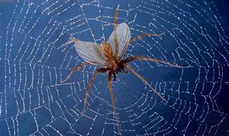 Do Bed Bugs Bite Cats Are There Flying Spiders In Fact Or It Is A Myth