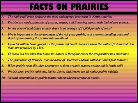 prairie facts characteristics and properties of the american grassland prairies