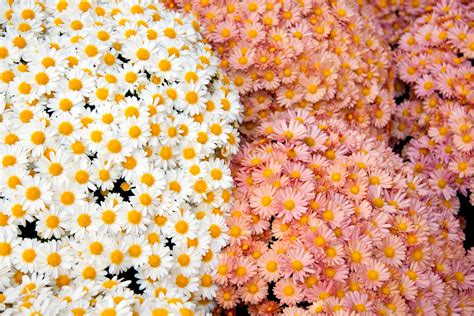 wallpaper tumblr flower flower wallpaper tumblr 8 free wallpaper