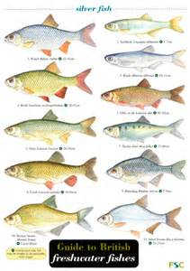 Freshwater Fish Freshwater Fish List Images Amp Pictures Becuo