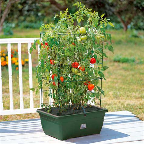 mini garden growing success kit vegetable growing