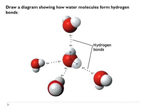 diagram of water molecule diagram of hydrogen bonding in water repair wiring scheme