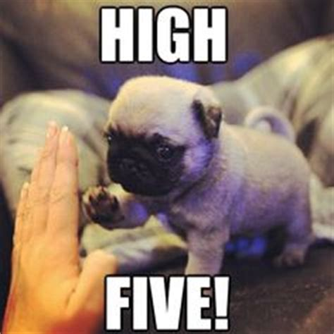 High Five Meme - high five yo on pinterest high five animal pics and