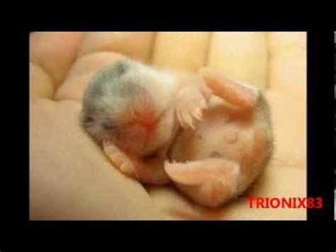 imagenes bonitas de animales animales recien nacidos imagenes imagenes tiernas y