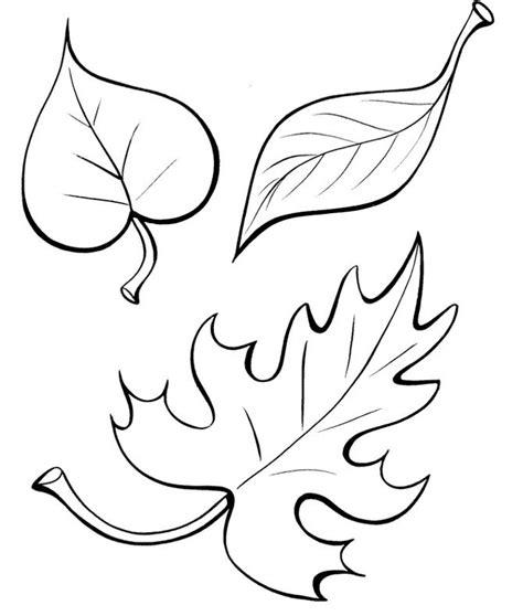 coloring pages of leaves in the fall the fall leaves coloring pages happy harvest pinterest