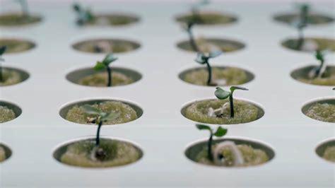 ikea krydda ikea launches indoor garden that can grow food all year