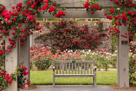 wallpaper flower garden rose bench nature rose garden flowers roses wallpaper flower