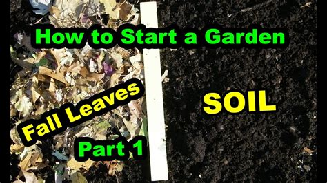 how to start a vegetable garden for beginners how to start a vegetable garden or food forest for