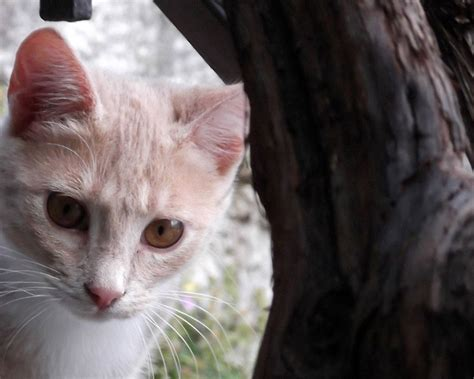 katzen zu hause katzen jugendtierschutz