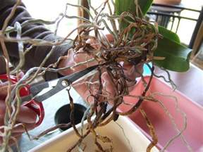 repotting orchids diy network blog made remade diy