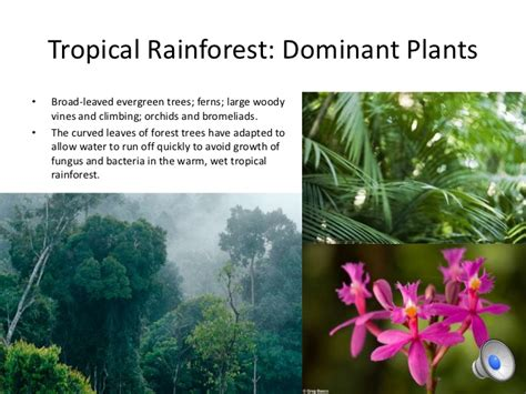 what are some plant adaptations in the tropical rainforest 10 biomes