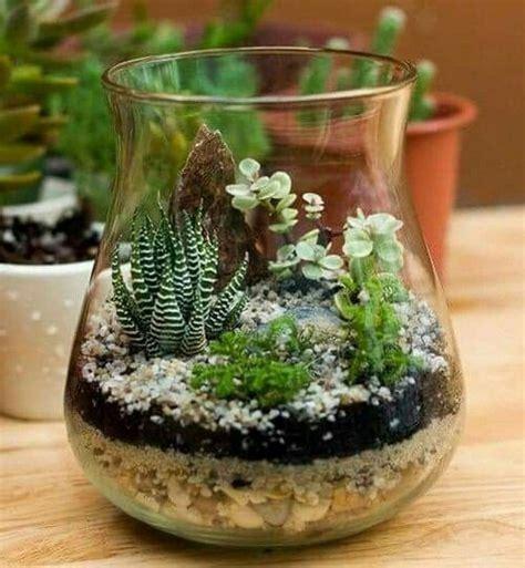 grow  succulent terrarium  garden