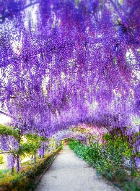 terrazza bardini firenze firenze 232 lilla a giardino bardini maraina in viaggio