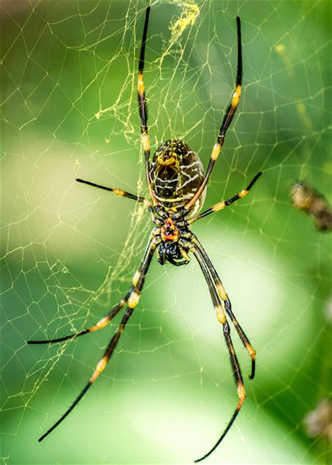 Garden Spider Legs Australia Serious Question How Frequently Do You Guys To Deal