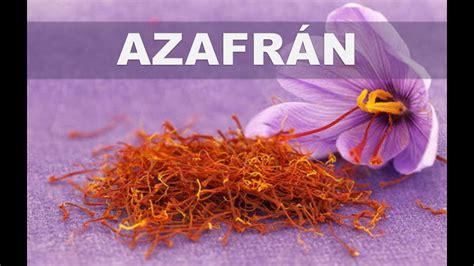 libro la flor del azafrn estos son los 5 mejores beneficios del azafr 225 n para la salud y bienestar del cuerpo youtube