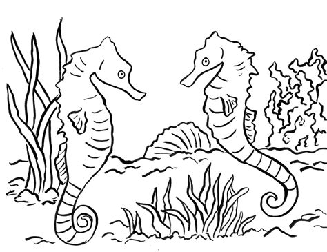 pages to color seahorse coloring pages coloringsuite