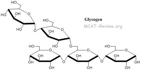 carbohydrates glycogen carbohydrates biological molecules mcat review