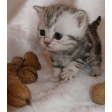 gets kitten kitten someone get me one animals money take my money