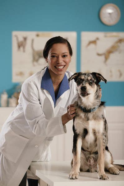 how much do breeders make how much does a veterinary technician make