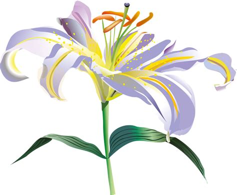 imagenes vectoriales png flores vectoriales con fondo transparente png arte digital