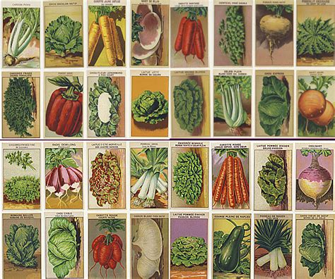 Vintage Vegetable Seed Packets From France Like I Care Free Vegetable Garden Seeds