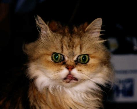 scary cat scary cat pictures www imgkid the image kid has it