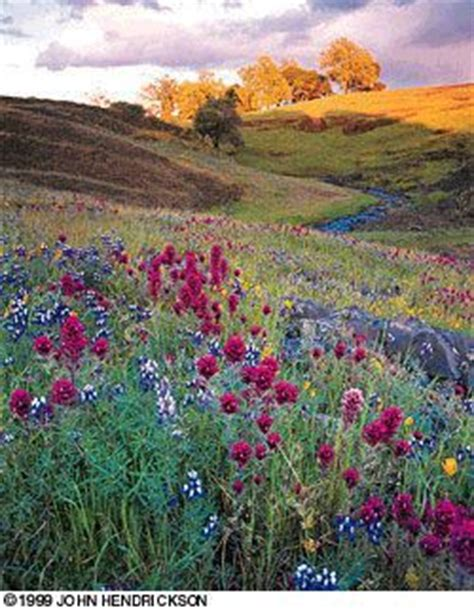 table mountain oroville ca 101 best images about wildflowers on yellow