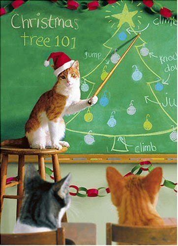 christmas cat teaching funny picture funnyexpo