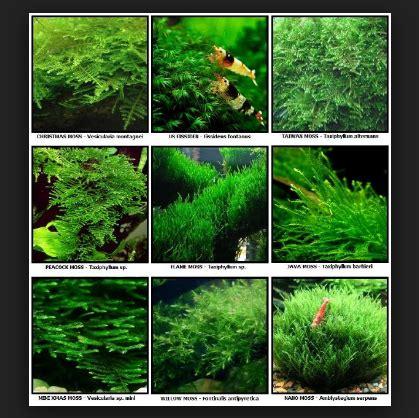 panduan membuat aquascape untuk pemula tips mudah cara membuat aquascape pada aquarium yang murah