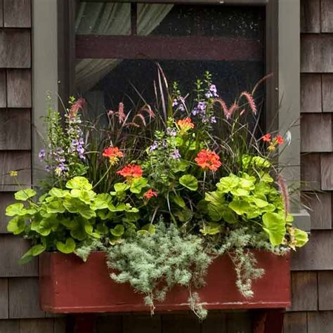 winter plants for window boxes 25 best ideas about fall window boxes on fall