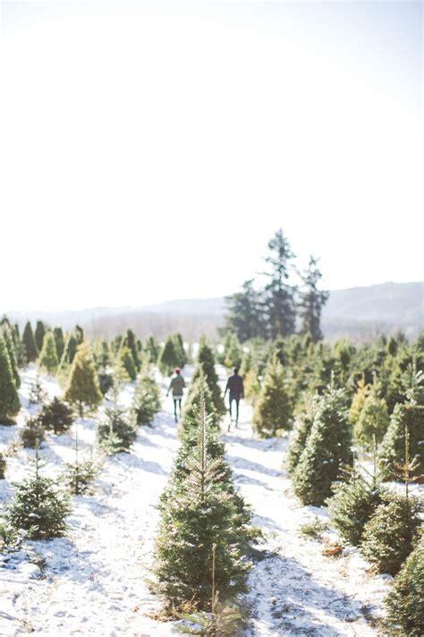 best christmas tree farm ri 25 best ideas about tree farms on tree shops tree