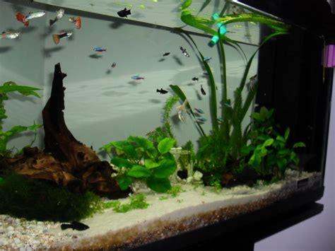 alimentazione scalari massimo zappino 187 acquari