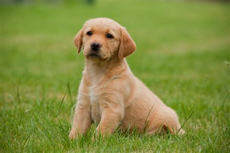 Dogs These Cute Wallpapers Of Dogs Are Really Nice To Set As