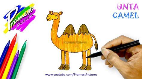unta belajar menggambar  mewarnai hewan  anak