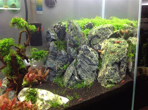 aquascaping forum hilfe bei pinselalgen algen im aquarium aquascaping forum