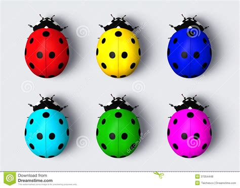 colors of ladybugs colored ladybugs stock illustration image of green