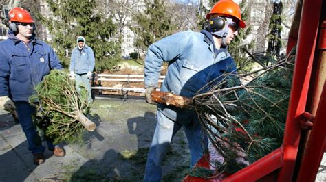 how to recycle your christmas tree 171 cbs boston
