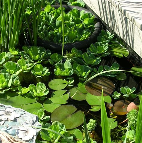 Planter Pond by Pond Plants Planting Equipment