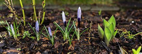 Was Ist Im Garten Im Februar Zu Tun by Hallo Februar Das Ist Jetzt Im Garten Zu Tun Gartenarbeit