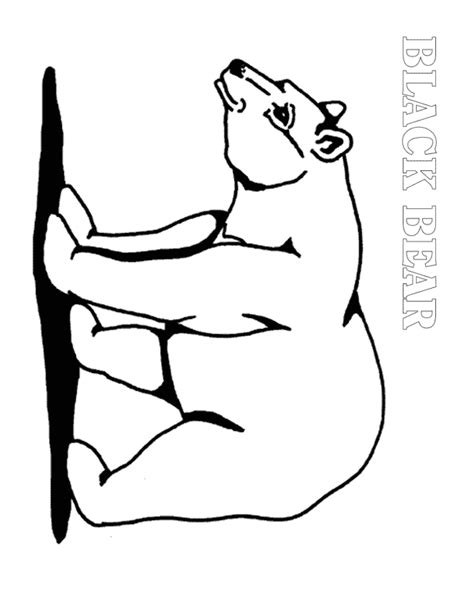black bear coloring pages coloring home