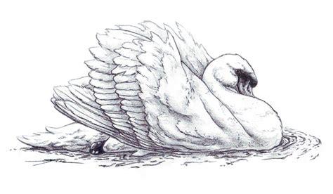 Pencil Drawings Of Swans swan pencil by eenuh on deviantart