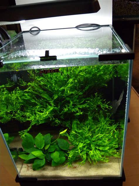 arredamento acquario acqua dolce acquario d acqua dolce arredamento acquario modulare