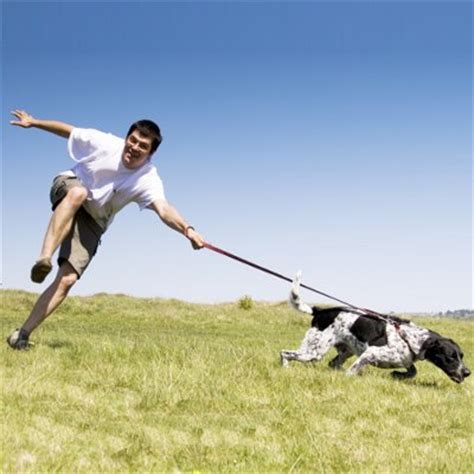 stop from pulling on leash how to stop your from pulling on the leash petsafe 174 articles