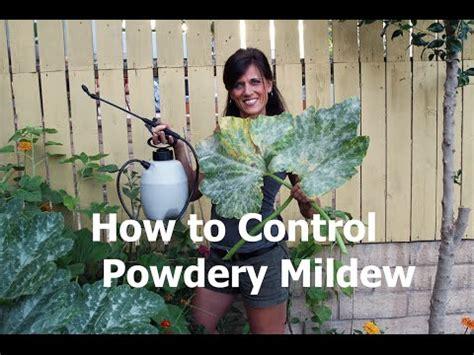 control powdery mildew  milk youtube