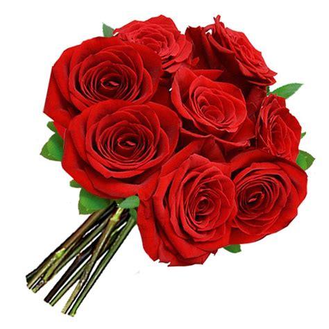imagenes de rosas turquesas buqu 234 de 8 rosas vermelhas nova flor