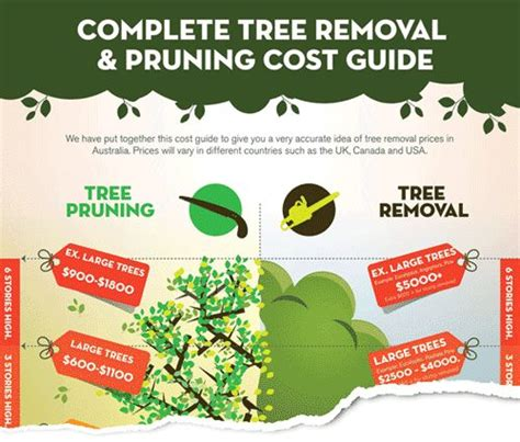 where to get best live tree prices tree removal melbourne compare 3 quotes save gt 46