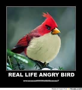 Angry Birds Meme - angry bird meme generator image memes at relatably com