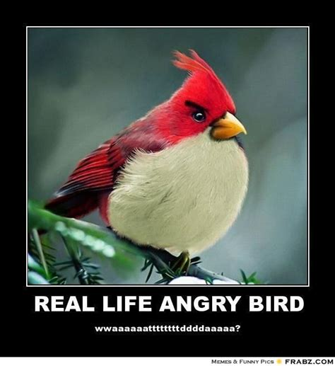 Angry Birds Meme - angry bird meme generator image memes at relatably com