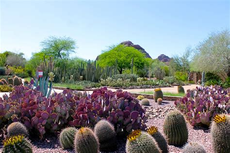 The Desert In Bloom At The Desert Botanical Garden In Scottsdale Botanical Gardens